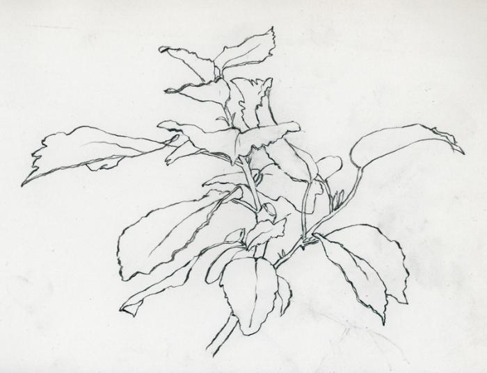 001-04-05-15_hibiscus